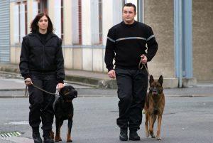 agent de sûreté cynophile chien