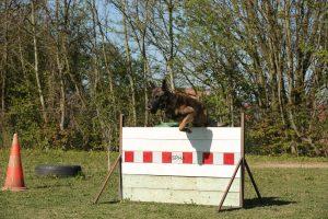 équipe cynophile chien détection explosifs