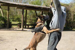 sécurité chien protection cynophile